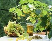 Липовый чай - надежное средство от кашля и простуды