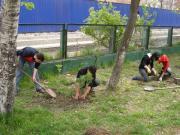 День посадки деревьев в Китае